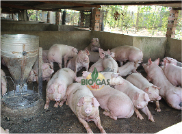 xu ly nuoc thai chan nuoi heo gia suc biogasviet.com